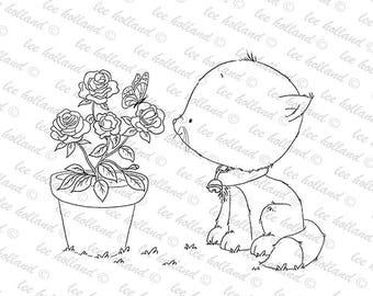 Kitten with rose bush