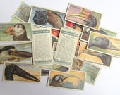 Curious Beaks, John Player cigarette cards: pack of 20 bird cards from 1929. Collectible ephemera or for craft, scrapbook, collage OT673