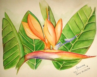 Bird of paradise - size 21cm watercolor Anissima * 29. 7 cm