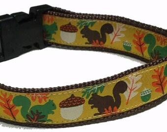 Dog Collar, Squirrels
