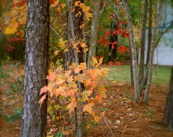 """Let Your Loved One  Know  You Are Grateful For Them!  Blank Note Cards """" Autumn You So Pretty!"""""""