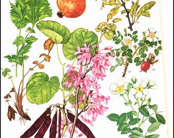 Mediterranean Wildflowers Plate 28 painted by Barbara Everard. Page is approx. 9 inches wide and 12 inches tall.