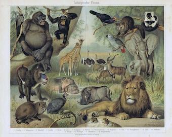 old litho african fauna, 1895 lion monkey giraffe, antilope