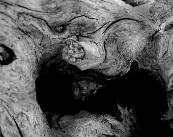 Oregon Coast Photography Black and White Driftwood Abstract Pacific Northwest Fine Art Print