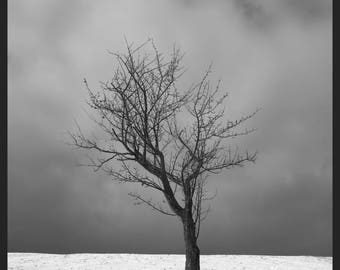 BIG SIZE Photography - Quebec - St-Joachim - Winter - Tree