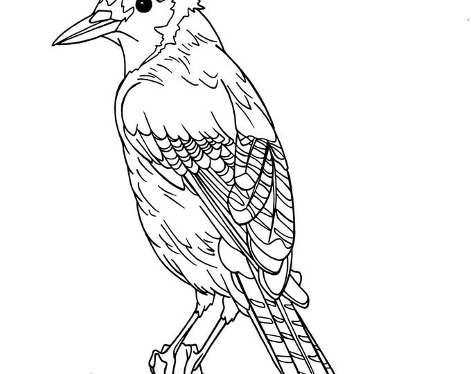 Coloring pages lisalkoch for Blue jay coloring page
