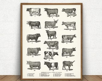 Breeds of Cow Printable, Types of Cattle, Digital Download, Farmhouse decor, Dairy Poster, Cottage Decor, Vintage Cows Print, Barn Wall Art