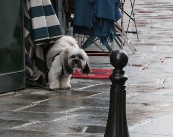 "Paris Photography, A Dog's Life, Large Wall Art Print, 20 cm x 30 cm, 8"" x 12"""