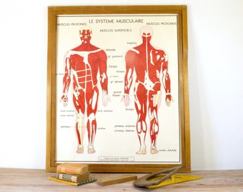 corps humain etsy. Black Bedroom Furniture Sets. Home Design Ideas