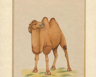 It's a Lonely Camel World, Art of Jaipur, Mixed Media