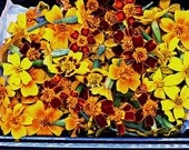 Fresh EDIBLE Marigold flower medley: mixture of lemon/tangerine/ red fire flowers. Try making ice cubes with these!