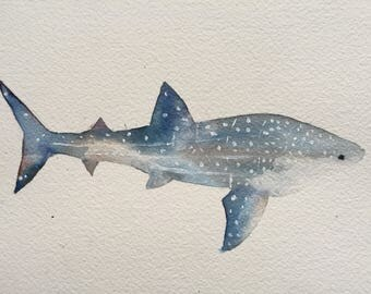Whale shark original painting illustration