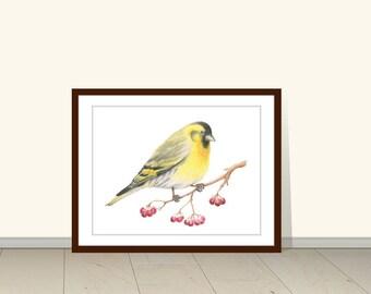 Carduelis Spinus Bird Art Print, Print of Watercolor Painting, Animal Wall Art, Watercolor Illustration, Wall Art, Bird Art, Print, Wildlife