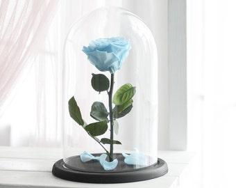 Beauty and the beast rose (Large), Mother's day gift, forever blue rose, Enchanted Rose, rose in glass, preserved rose, five  year rose