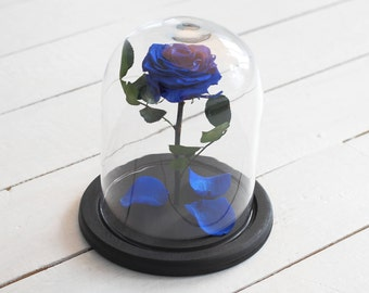 Beauty and the beast rose (Medium), Mother's day gift, forever blue rose, Enchanted Rose, rose in glass, preserved rose, five  year rose