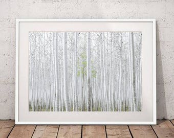 Forest Photography, Tree Nature Art Print, Landscape Photo, Birch Forest Print Large Wall Art Nature Decor Printable Digital Download
