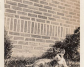 Vintage Photo Cute Kitten Cat Hiding in Grass Found Black & White Antique Ephemera Paper Art Vernacular Snapshot Interior Design Mood