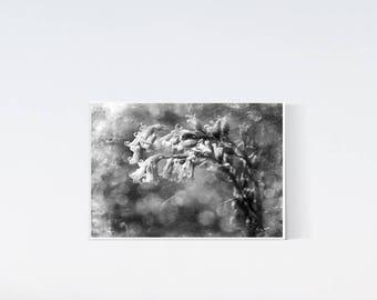 5x7 wild flower print - Botanical print - black and white art - dark artwork, wall art decor, living room art, bedroom, flowers print
