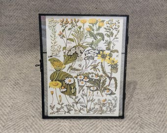 Vintage framed botanical drawing, flower illustrations, botanical print, floral, in glass frame, Green leaves Daisies Yellow