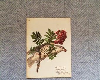 Genuine vintage framed botanical drawing, flower illustrations, print, floral, glass frame, double sided red berries birds