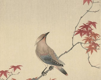 "Japanese Art Print ""Japanese Waxwing on a Maple"" by Ohara Koson, woodblock print reproduction, fine art, asian art, cultural art, seasonal"