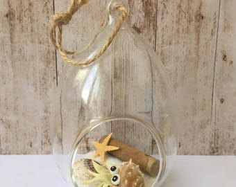 Crustacean Fimo vanilla and his shell in a jar