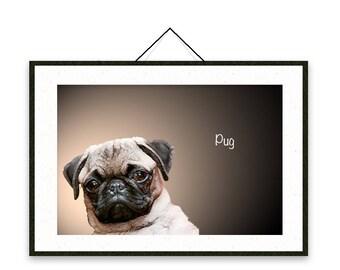 Pug - Dog breed poster, wall sticker, nursery decor, dog print, wall print, nursery print, shabby print   Tropparoba - 100% made in Italy