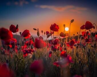 Poppy's At Sunset