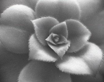wall photo art 35mm film darkroom printed
