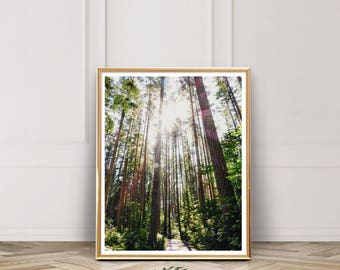 Forest Print, Forest Wall Art, Tree Print, Instant Download, Printable Photo, Nursery Decor, Printable Art, Wall Art, Decor, Seattle, Green