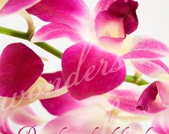 Seek Peace Orchid - Fine Art Photograph