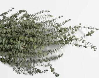 Dried Baby Eucalyptus, Blue Green, Bunch, Bundle, Bulk Stems, Dried Flower, Dried Greens, Dried Eucalyptus spiral, eucalyptus, wreath supply