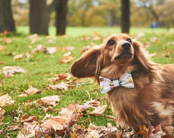 Dog Bow Tie | Path | Free Shipping to Canada