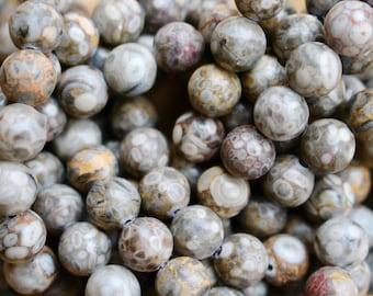 8mm Crinoid Jasper beads, full strand, natural stone beads, round, 80132
