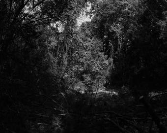 Black and White Photo of a Beautiful Wooded Area of Walnut Creek Park  // Photography in Austin, Texas // Nature, Forest, Trees, Photograph