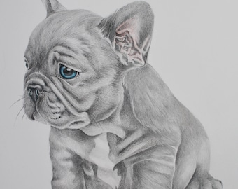 A3 Pet Portrait - Custom Pet portrait - Cat Portrait - Dog Portrait - Pet Portrait - Cat Portraits - Dog Portraits - Pencil Pet portrait