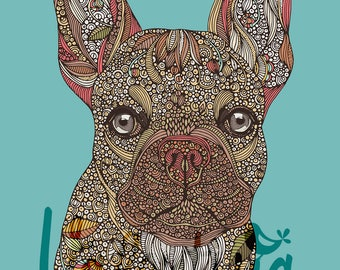 Pete the French bulldog
