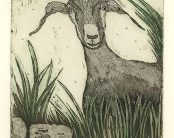 farm animal art print, farm art print, goat art print, goat wall art, portrait art, kitchen art print, country print, etching, printmaking