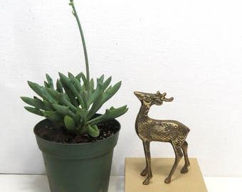 Brass Woodland Deer Figure/ Small Buck Stag or Reindeer with Antlers/ Animal Figurine
