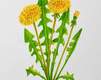 Dandelion watercolor painting / Original watercolor / flower painting 9 x 12