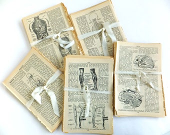 Antique medical dictionary pages, Vintage Health and Medicine papers, 30 original book pages, Craft paper ephemera