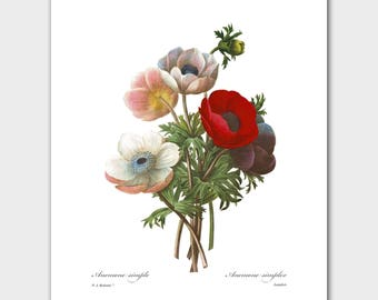 Botanical Print (Red Poppy Art, French Country Wall Decor) -- Pierre Redoute
