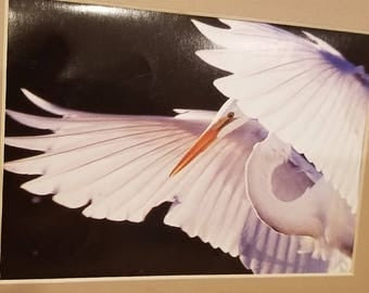 From Arizona Highways vintage Magazine print of the egret in acid free mats lovely room decor