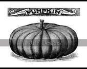 Instant Digital Download, Vintage Victorian Antique Graphic, Pumpkin Ad Advertisement, Printable Image Halloween, Thanksgiving, Typography