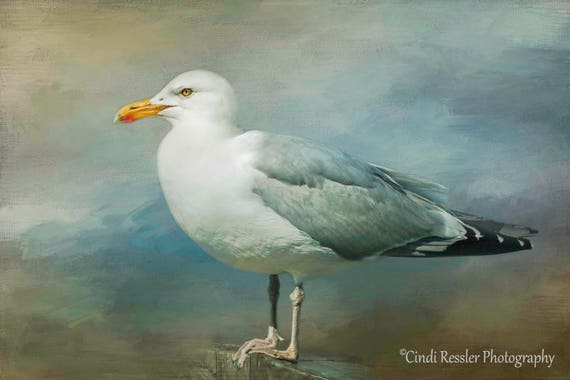 Herring Gull, Birds, Bird, Photography, Photo, Bird Lover Gift, Nature Lover, Fine Art, Housewarming Gift, Beach Decor, Beaches, Home Decor