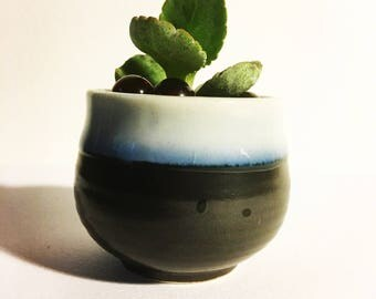 mother of a thousand modern succulent planter and in japanese styled mini planter