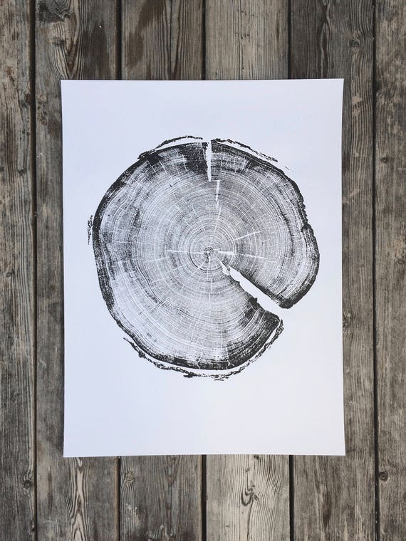 183 year old Tree, Uinta Forest, Lodge Pole Pine, Tree Ring Art Print, Natural Geometry Art. Real Tree Stump Art, Geometric Art Print