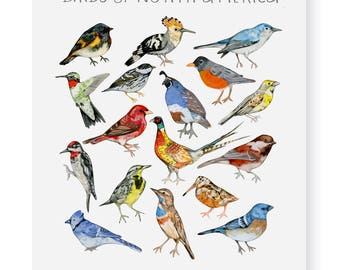 Birds of North America Fine Art Giclee Print