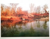 Photo Postcard - Alaskan Malamute at the Pond