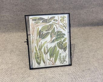 Vintage framed botanical drawing, vintage botanical flower illustrations, botanical prints, floral, in glass frame, Green leaves